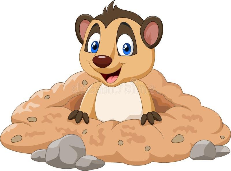 Cartoon meerkat in a hole. Illustration of Cartoon meerkat in a hole stock illustration
