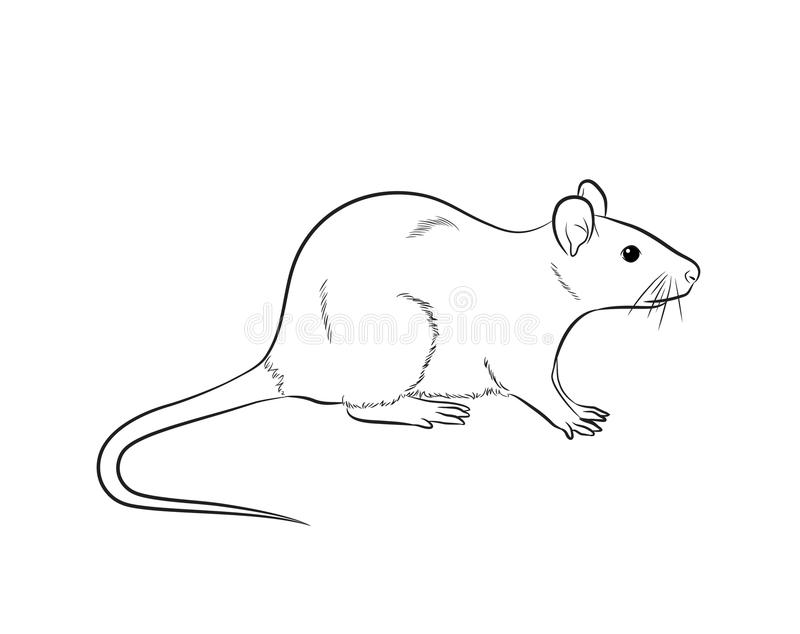 Line Art Mouse : Cartoon mouse drawing vector stock illustration