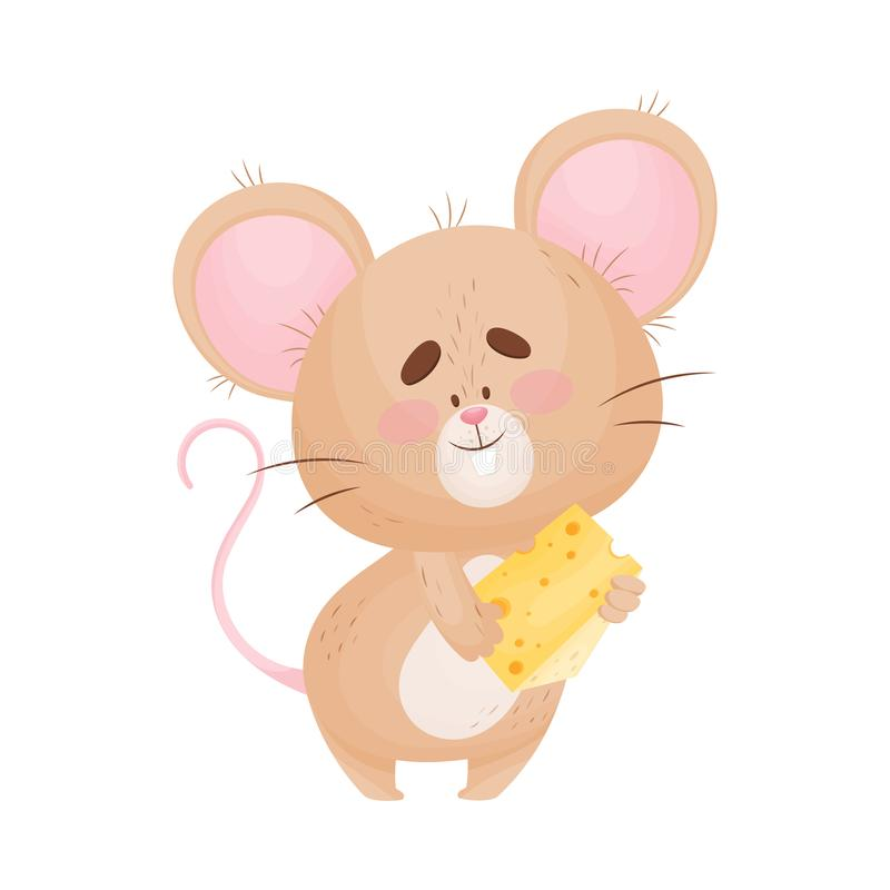 Cartoon mouse is holding a small piece of cheese. Vector illustration. Cute humanized little mouse is holding a small yellow piece of cheese. Vector royalty free illustration