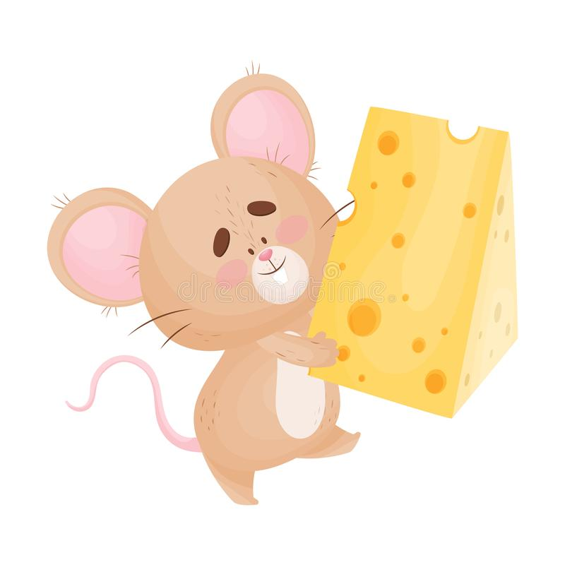 Cartoon mouse with a piece of cheese. Vector illustration. Cute humanized mouse carries a large piece of cheese. Vector illustration stock illustration
