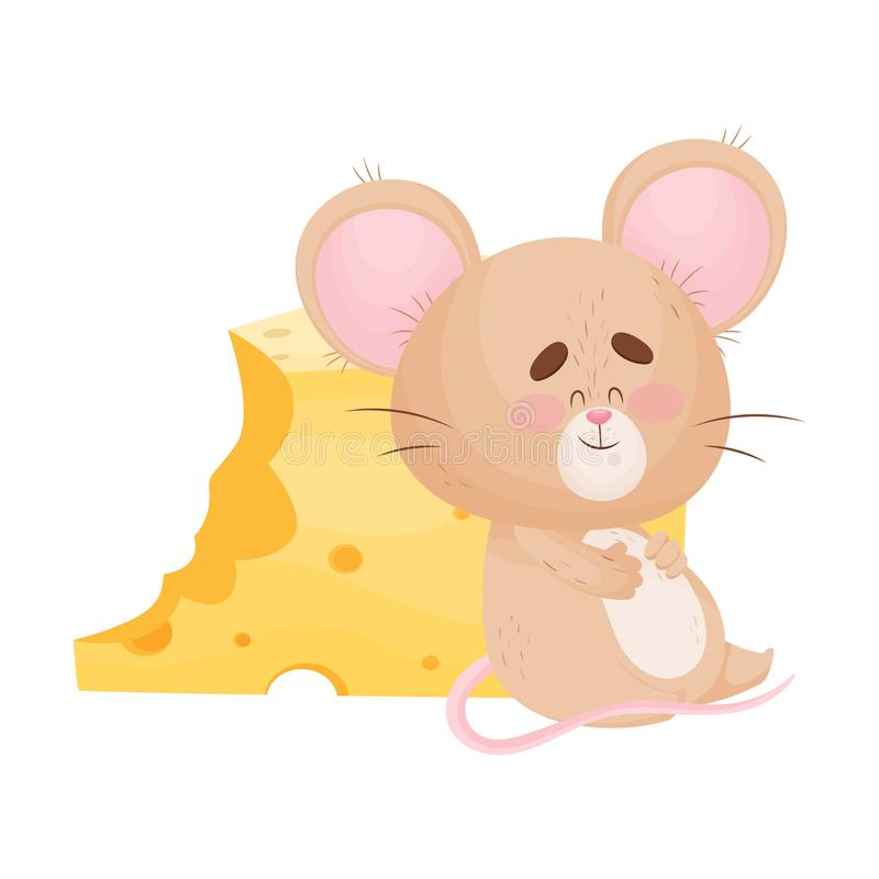 Cartoon mouse is sitting near a piece of cheese. Vector illustration. Cute humanized mouse has overeaten and sits near a large bitten piece of cheese. Vector stock illustration