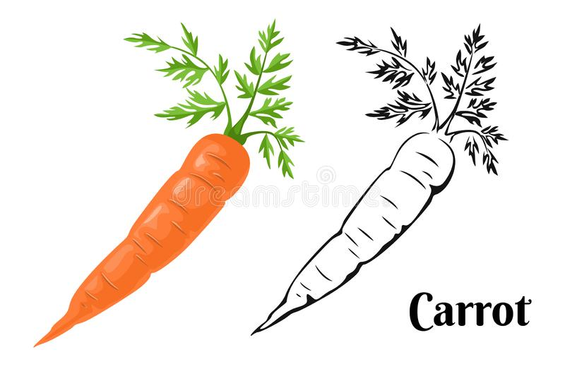 Cartoon orange carrot isolated on a white background and black and white illustration. royalty free illustration