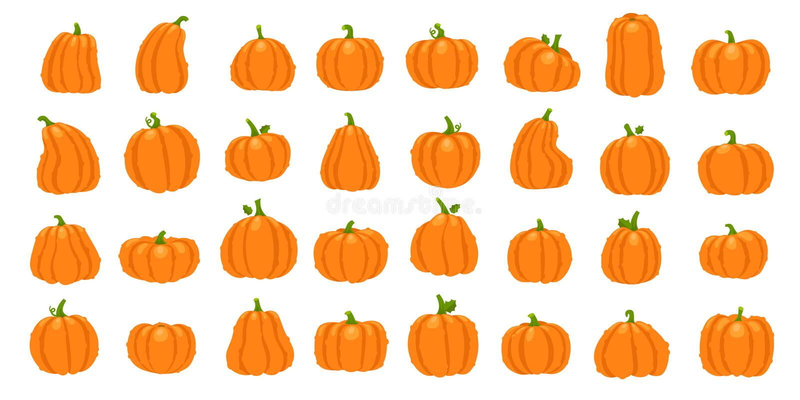Cartoon orange pumpkin. Halloween october holiday decorative pumpkins. Yellow gourd, healthy squash vegetable vector stock illustration