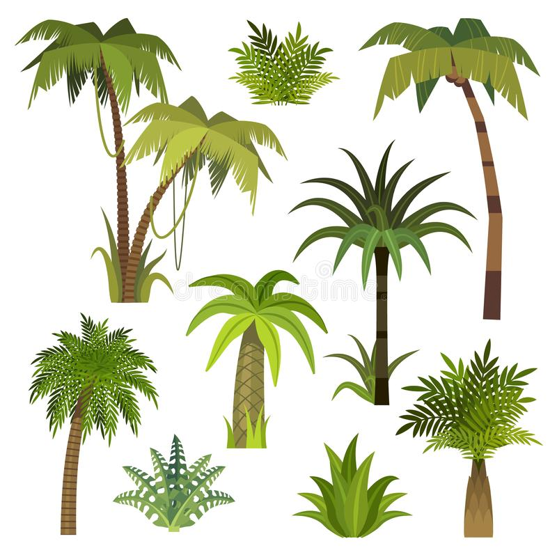Cartoon palm tree. Jungle palm trees with green leaves, exotic hawaii forest, miami greenery coconut beach palms. Cartoon palm tree. Jungle palm trees with green stock illustration