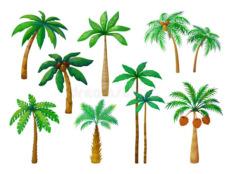 Cartoon palm tree. Jungle palm trees with green leaves, coconut beach palms isolated vector. Set royalty free illustration