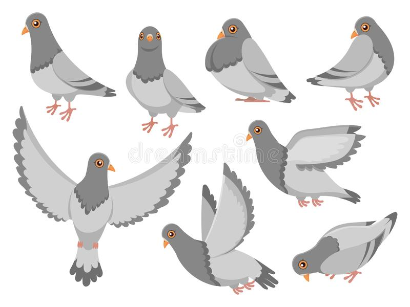 Cartoon pigeon. City dove bird, flying pigeons and town birds doves isolated vector illustration set. Cartoon pigeon. City dove bird, flying pigeons and town vector illustration