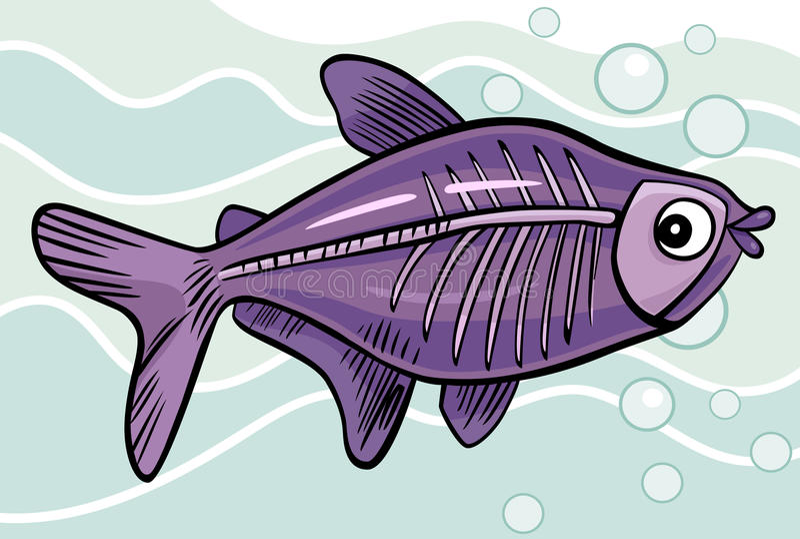 Cartoon x-ray fish. Cartoon illustration of x-ray fish royalty free illustration