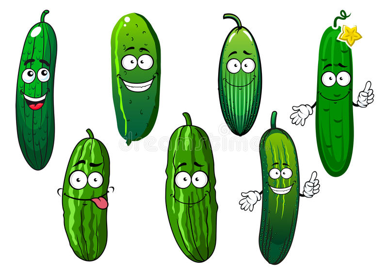 Cartoon ripe green organic cucumber vegetables. Green ripe cucumber vegetables cartoon characters. Healthy vegetables for agriculture harvest, recipe book and stock illustration