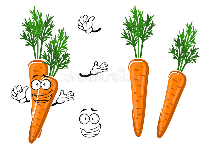 Cartoon ripe orange carrot vegetable. Fresh farm crunchy orange carrot vegetable cartoon character with bright green leaves. Addition to recipe book, children royalty free illustration