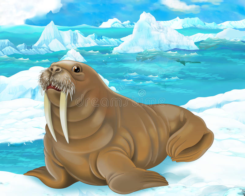 Cartoon scene - arctic animals - walrus royalty free illustration