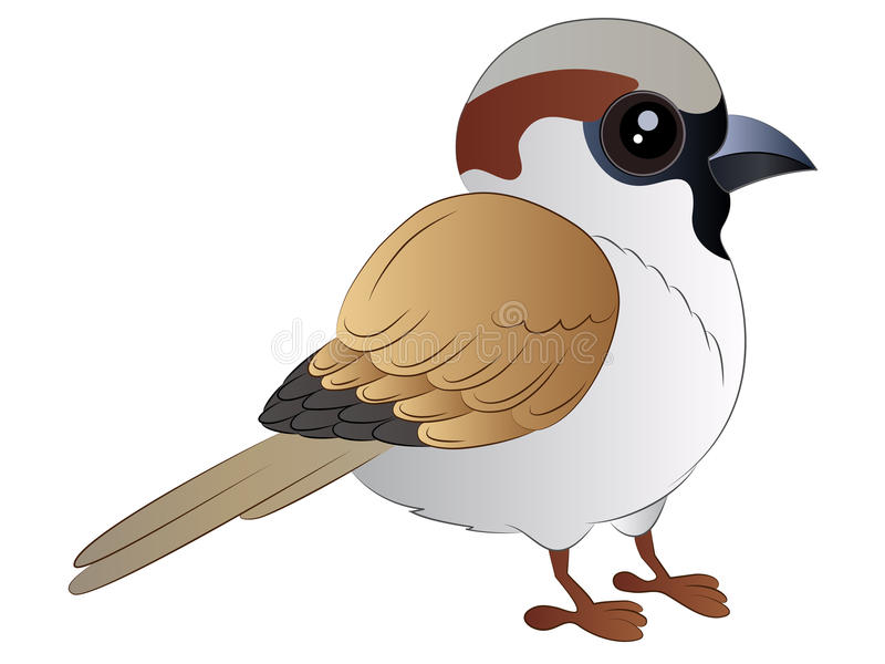 cartoon sparrow vector illustration clipart stock image rh dreamstime com sparrow clipart images sparrow clipart images