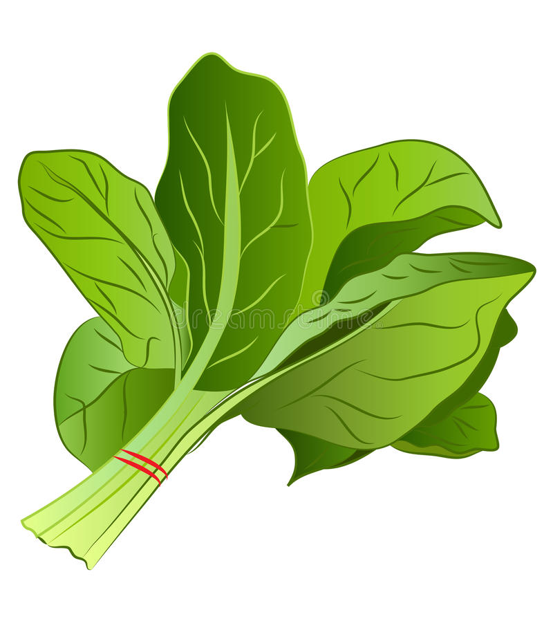 Cartoon Spinach royalty free illustration