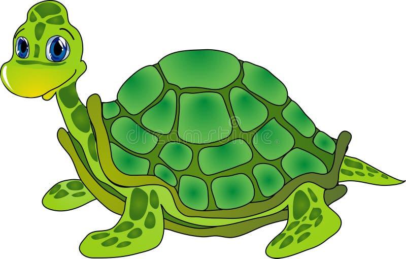 Download Cartoon tortoise stock vector. Illustration of shelled - 11705690