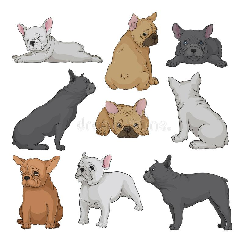 Cartoon vector set of boston terrier puppies in different poses. Small domestic dog with wrinkled muzzle and smooth coat. Set of boston terrier puppies in royalty free illustration