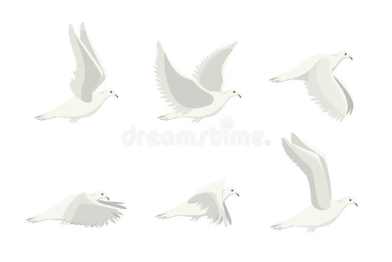 Cartoon White Dove Bird Set. Vector stock illustration
