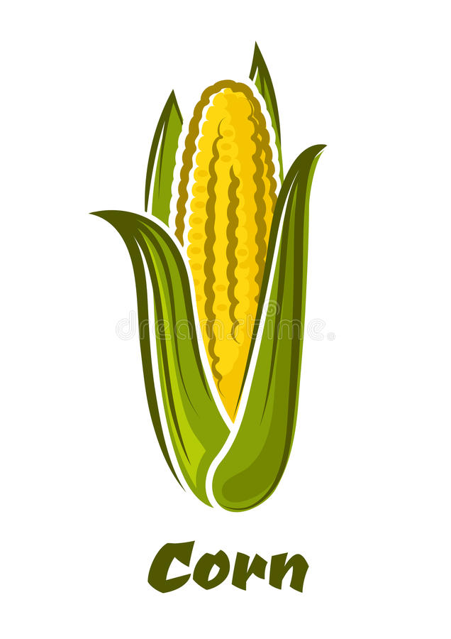 Cartoon yellow corn vegetable on the cob. Ripe fresh yellow corn on the cob vegetable with long green leaves in cartoon style isolated on white background with vector illustration