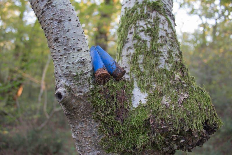 Cartucho de búsqueda usado viejo, oxidado en los cartuchos oxidados del bosque en el bosque imágenes de archivo libres de regalías