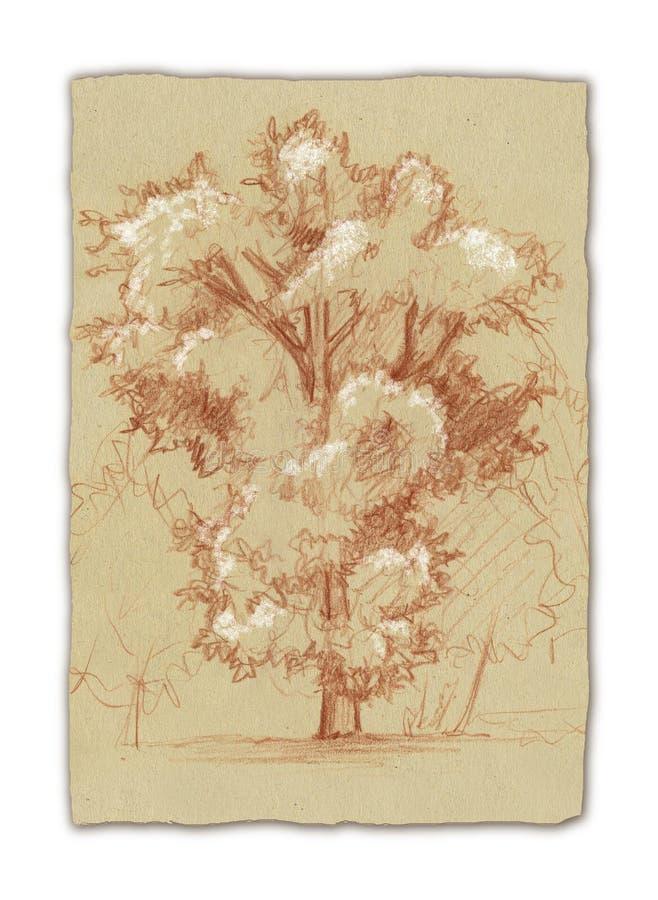 Carvalho-árvore ilustração stock