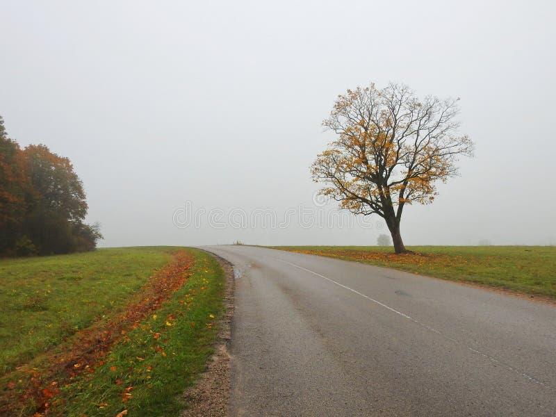 Carvalho perto da estrada, Lituânia fotografia de stock royalty free