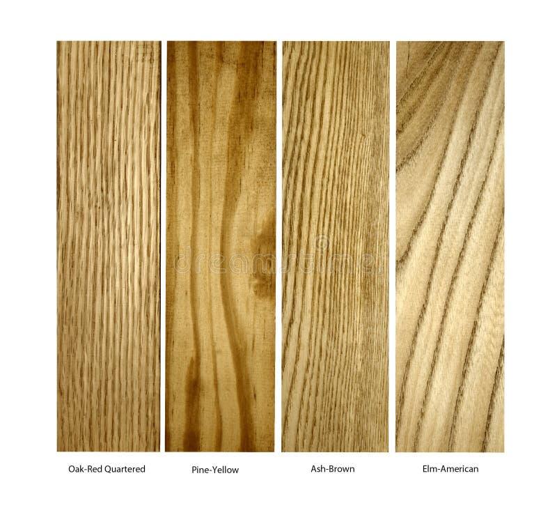 Carvalho, pinho, amostras de madeira reais de Ash.Elm, isoladas fotos de stock royalty free