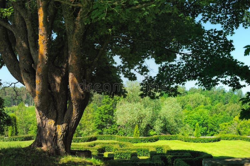 Download Carvalho poderoso foto de stock. Imagem de floresta, gramado - 26507732