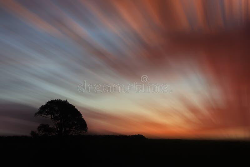 Carvalho sobre nuvens vermelhas blured fotos de stock royalty free