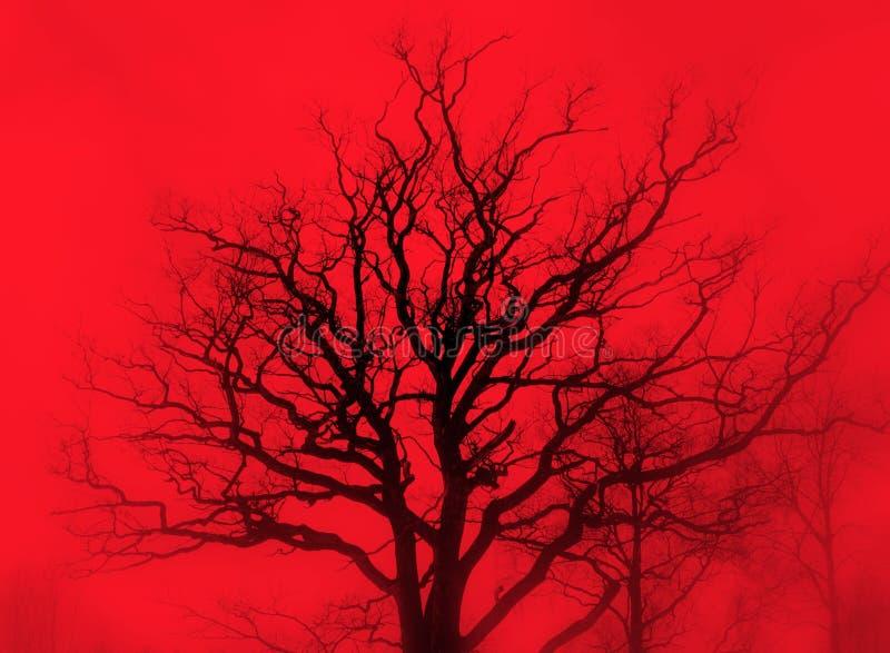Carvalho sombrio na névoa vermelha foto de stock royalty free