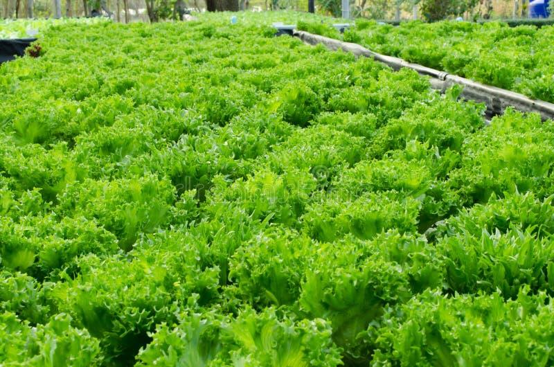 Carvalho verde fotos de stock