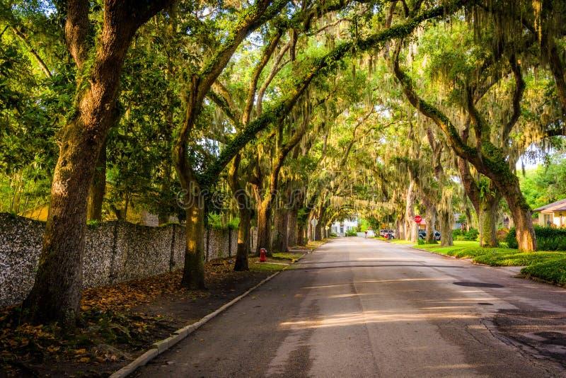 Carvalhos ao longo da avenida da magnólia em St Augustine, Florida imagem de stock