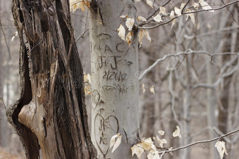 Carved romantic letters in tree bark stock photos