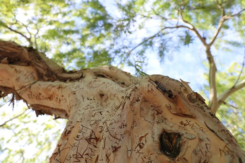 Carvings on branch royalty free stock images
