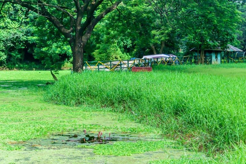 A casa é cercada por plantas e por árvores Vista na cabine do feriado por um lago Casa minúscula perto da água Conceito do feriad imagem de stock