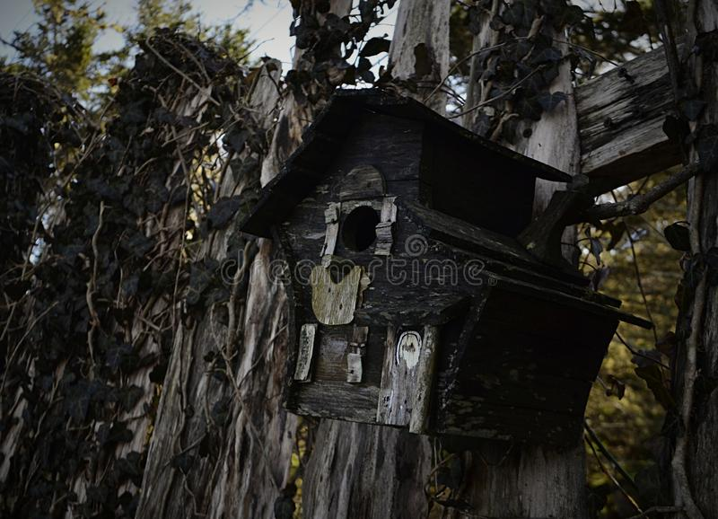 Casa abandonada do pássaro fotos de stock royalty free
