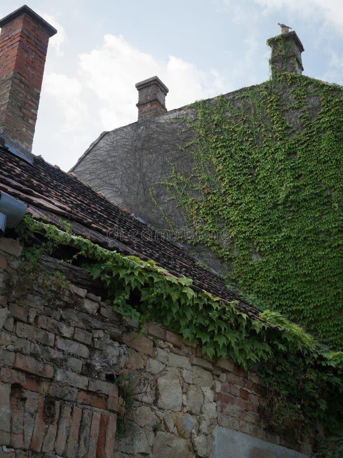 Casa abandonada velha coberto de vegetação com a hera imagens de stock