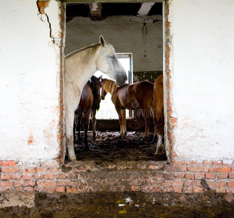 casa abbandonata dei cavalli fotografia stock