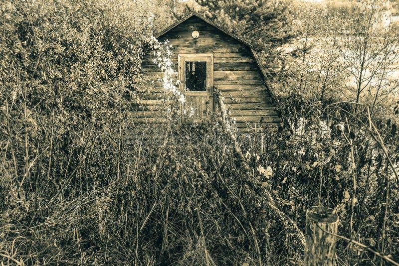 Casa abbandonata nella vecchia capanna di legno della foresta invasa con la foresta fotografia stock