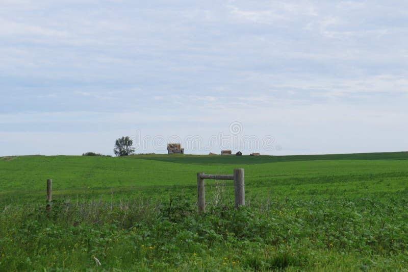 Casa abbandonata in un campo verde senza fine fotografia stock libera da diritti