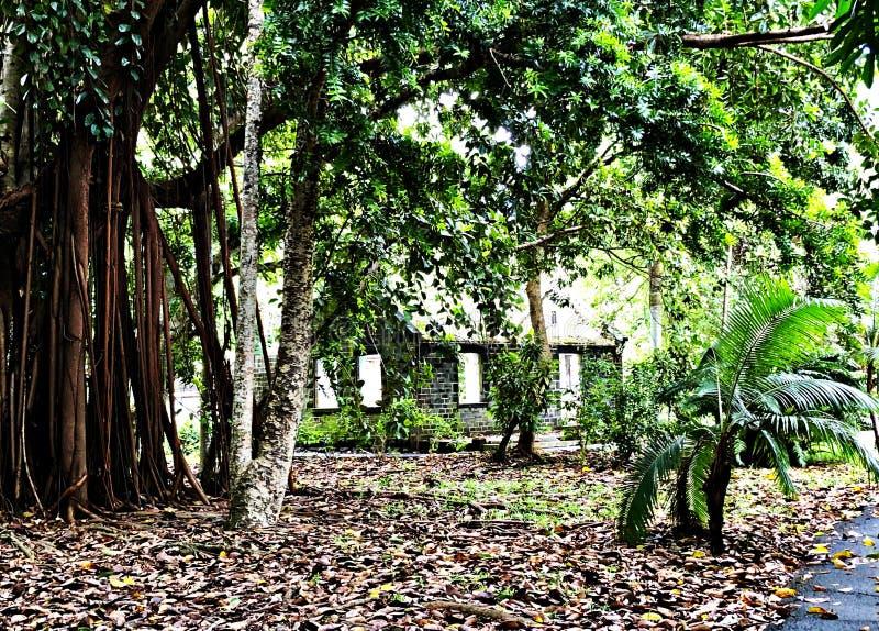 Casa antica nascosta in un giardino botanico, Mauritius Island fotografia stock