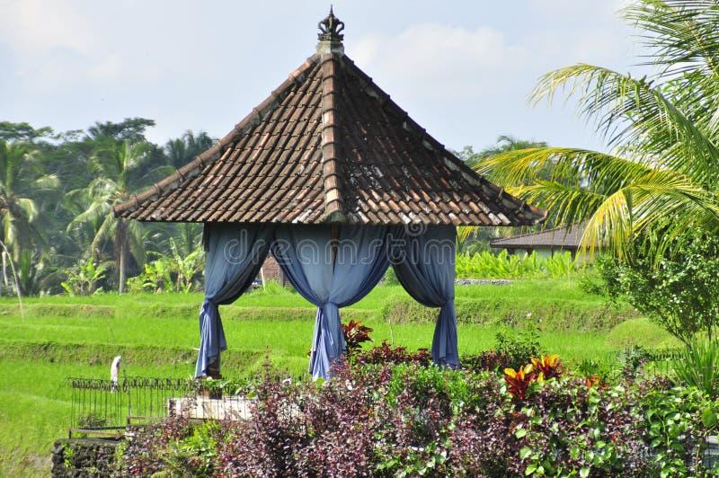 A casa asiática tradicional no arroz coloca em Bali, Indonésia imagem de stock