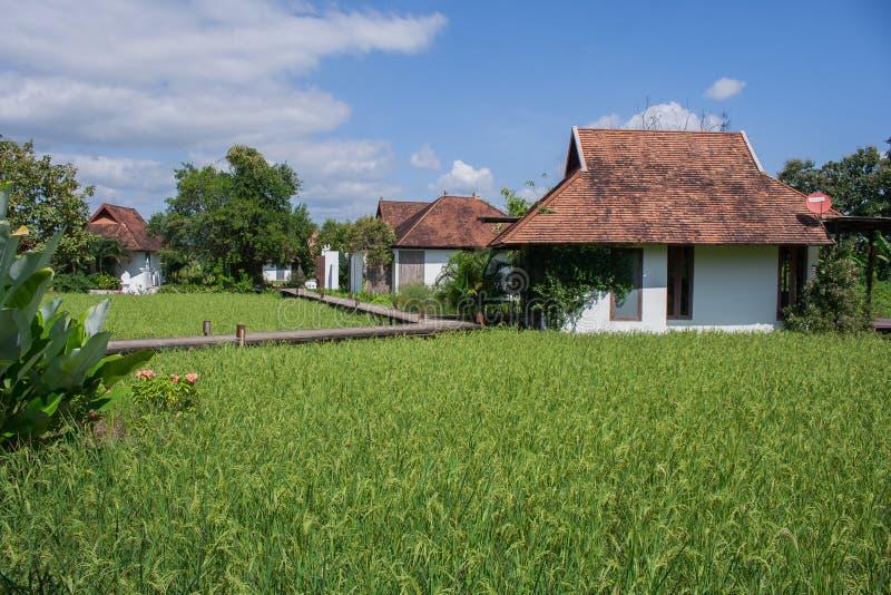 Casa bianca nel giacimento del riso fotografia stock libera da diritti