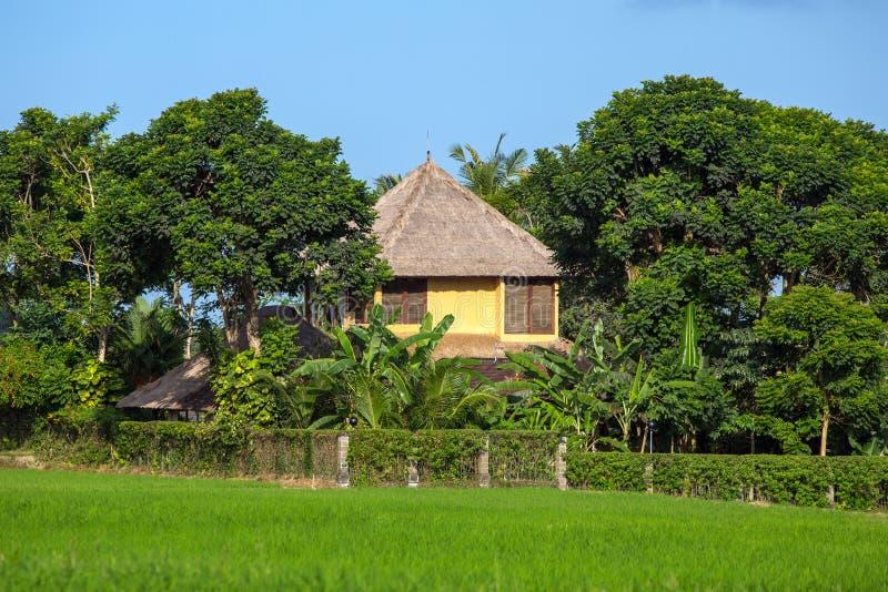A casa bonita no arroz coloca em Ubud, Bali foto de stock