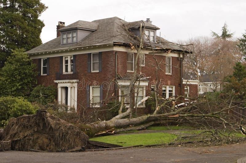 Casa com dano da árvore fotos de stock