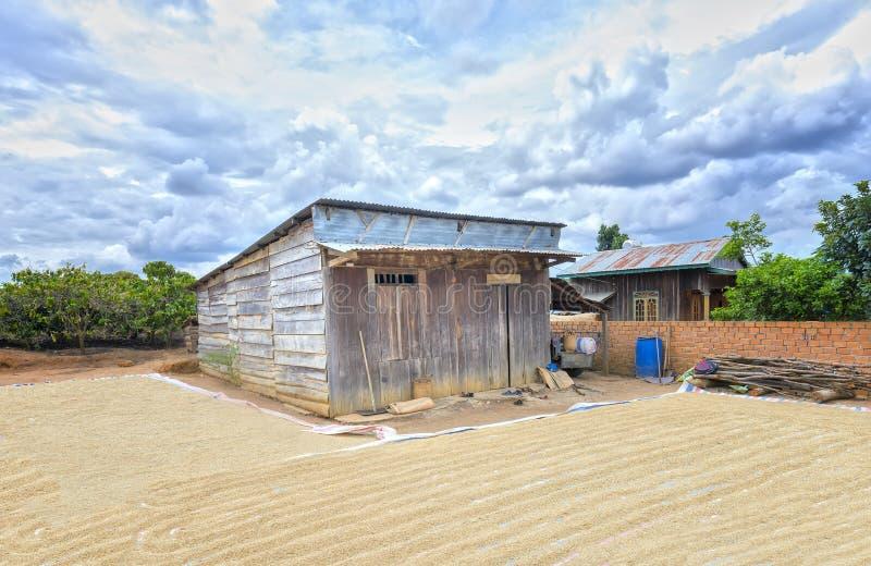 A casa completamente de almofadas de arroz na jarda reflete fotos de stock