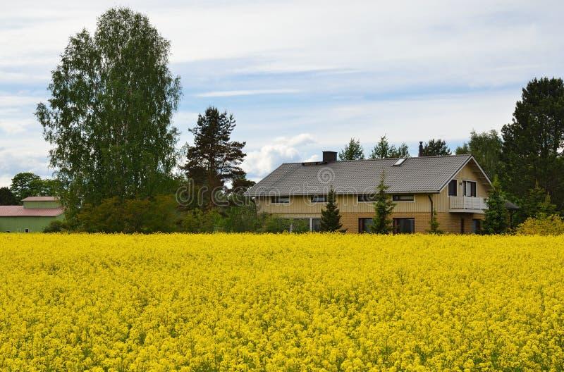 Download Casa De Campo E Prado Com Plantas Amarelas Imagem de Stock - Imagem de outdoor, cottage: 29834359