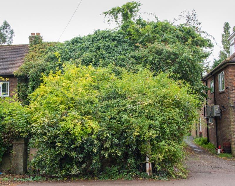 Casa coperta dall'albero nascosto fotografia stock libera da diritti