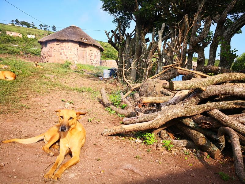Casa da cabana do estabelecimento do cão de Eshowe fotos de stock royalty free