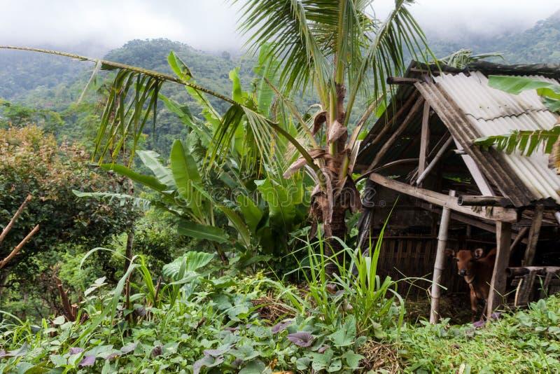 Casa da palha na aldeia da montanha imagem de stock royalty free
