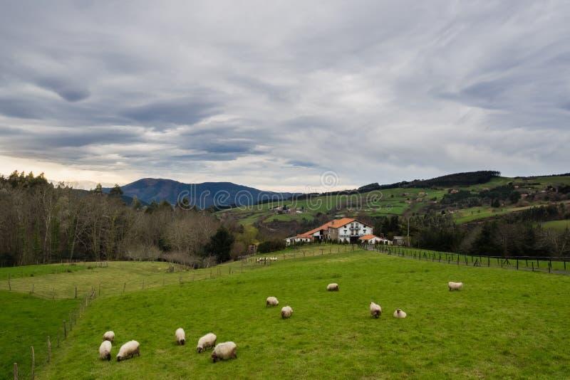 Casa da quinta Basque típica com os carneiros que pastam em um dia nebuloso imagens de stock royalty free