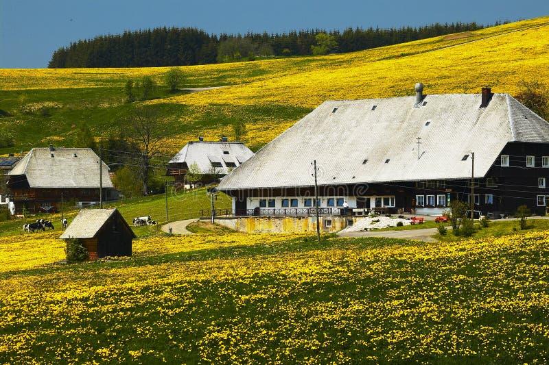 Casa da quinta da floresta preta no prado do verão imagens de stock