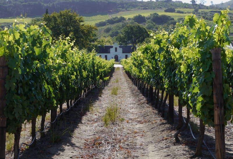Casa da quinta velha no vinhedo, África do Sul foto de stock royalty free